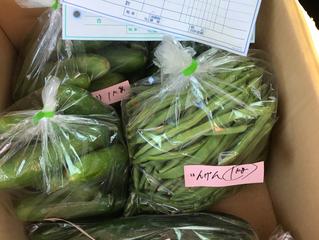 旭元気野菜はいよいよ夏野菜、種類も量も多くなってきました。