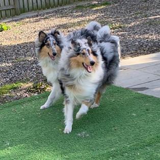 Fynn and Odin