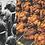 Thumbnail: Olivier Culmann,Une vie de poulet