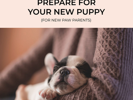 [Paw Parents Guide] Prepare for Your New Puppy