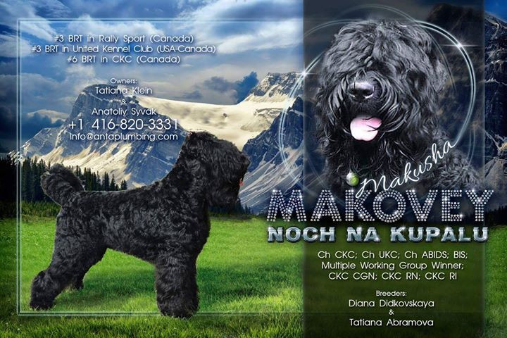 MAKOVEY 💠 BLACK DIAMOND 💠BLACK RUSSIAN TERRIER     🐺 BLACK RU