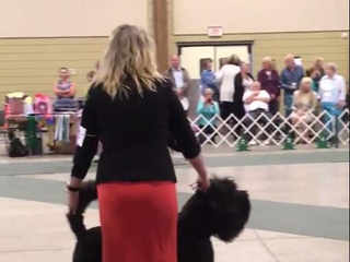 Black Russian Terrier National 2019
