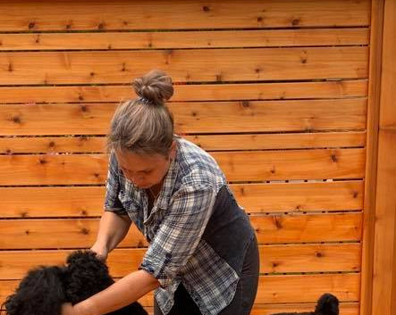 IL Bagheera JOY Black Russian Terrier Grooming_
