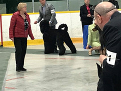Makovey Black Russian Terrier BOB GR3; GR4