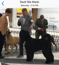 Makovey Sault Ste Marie Kennel Club