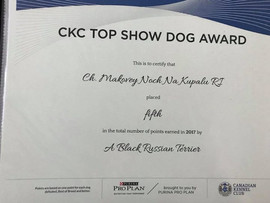 CKC TOP Show DOG AWARD