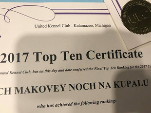 United Kennel Club's invitation to Black Russian Terrier Makovey 2018