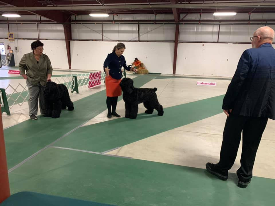Show Grooming for Black Russian Terrier Canada