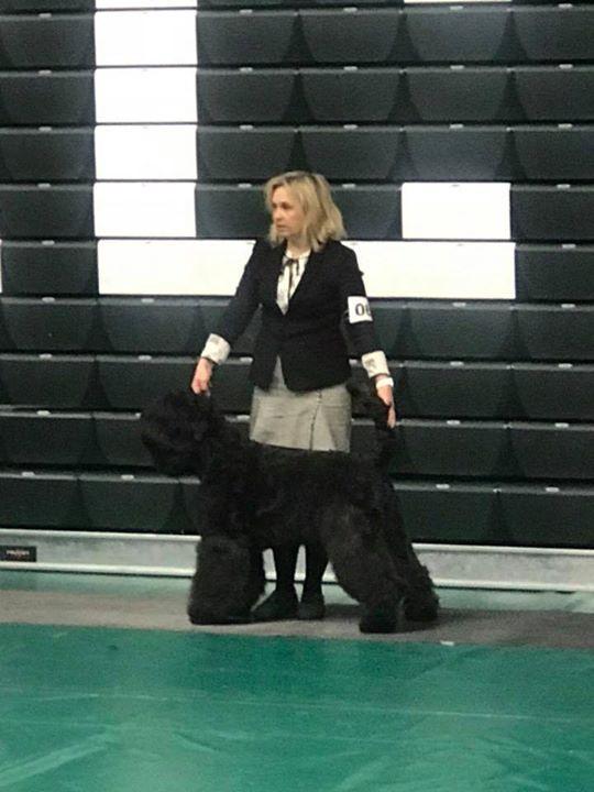Black Russian Terrier  - female Baghhera Bella Deti Arbata