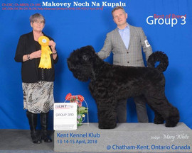Makovey Black Russian Terrier  GR3