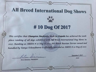 ABI Dog Show TOP-TEN Black Russian Terrier