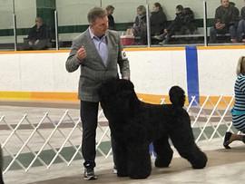 Makovey Black Russian Terrier GR3 GR4