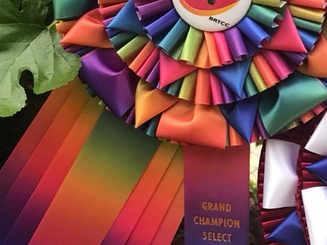 Our lovely boy GRAND Champion CKC receiv