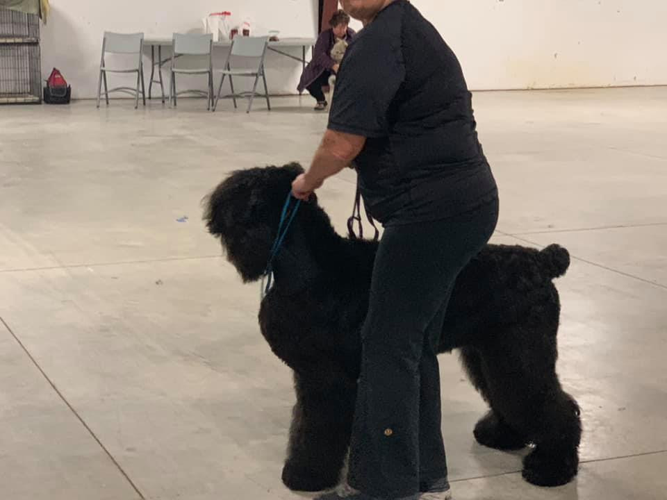 IL Joy Bonnie Rose after Show Grooming is ready for the ring