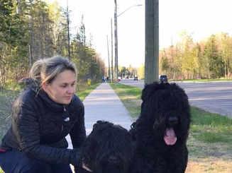 Black Russian Terriers ona walk (Canada)