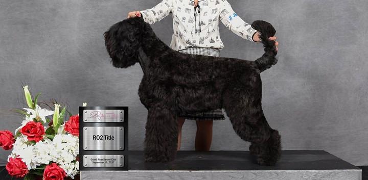 Black Russian Terrier Baghhera Bella Deti Arbata