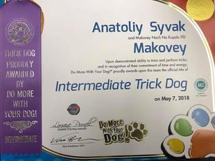 TRICK Title 2018 Makovey (Black Russian Terrier)