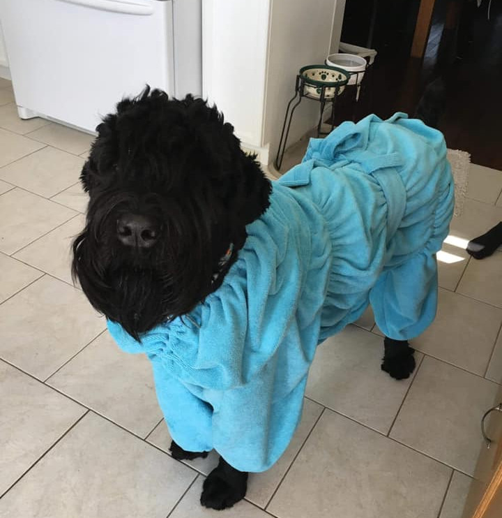 Bathrob_for_dog.jpg