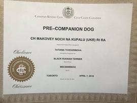 Black Russian Terrier Makovey  - PCD CKC