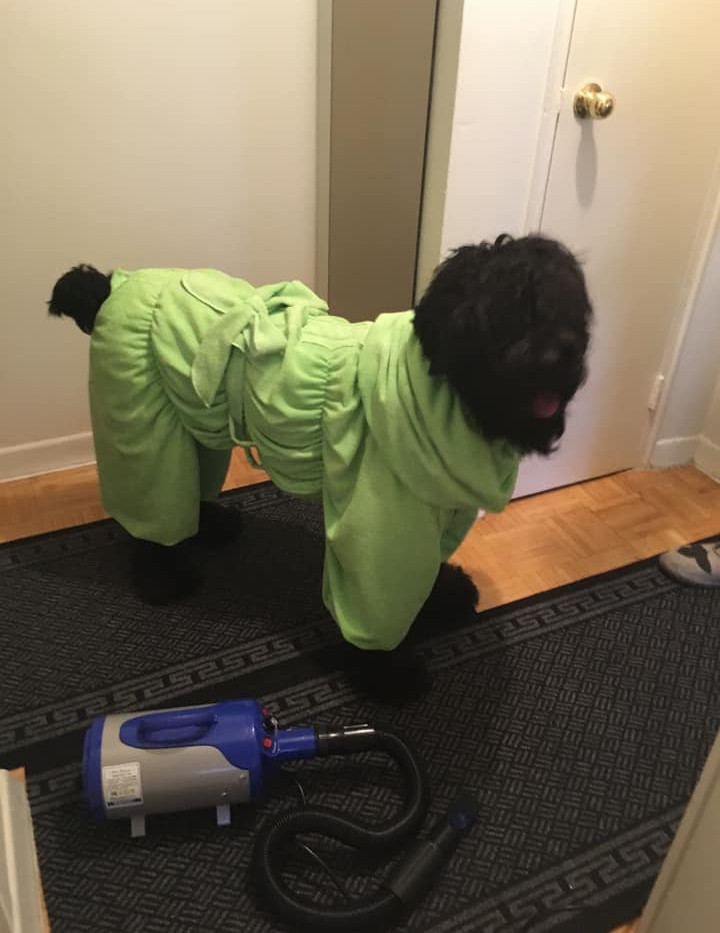 Bathrob for Black Russian Terrier