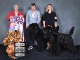 Black Russian Terrier NATIONAL Specialty2019