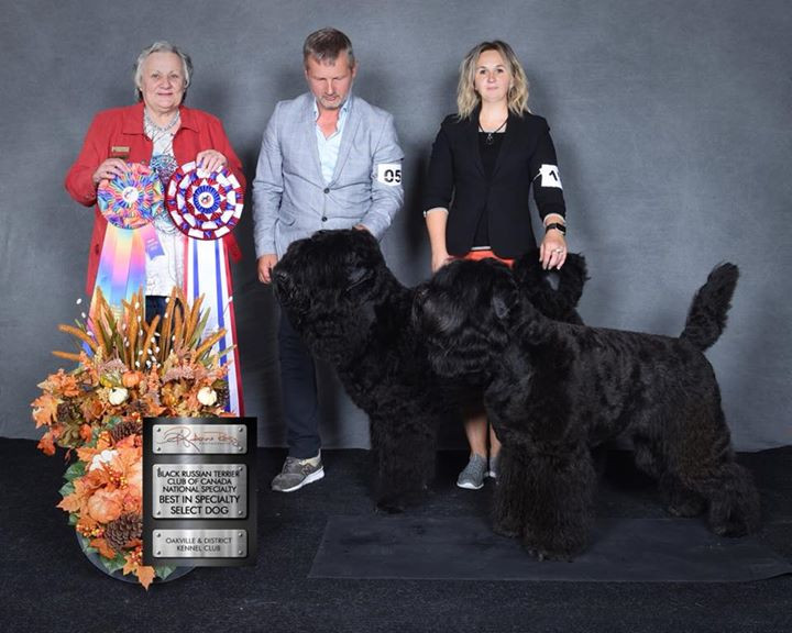 National Specialty Canada 2018 Black Russian Terrier