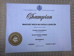 Black Russian Terrier Makovey Title CHAMPION