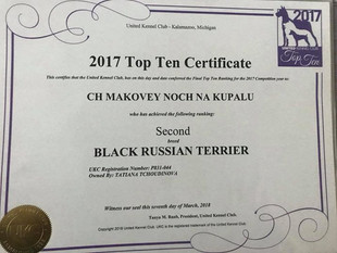 TOP TEN DOG  - UKC - United Kennel Club - Black Russian Terrier