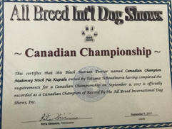 ABI Dog Show Champion Black Russian Terrier