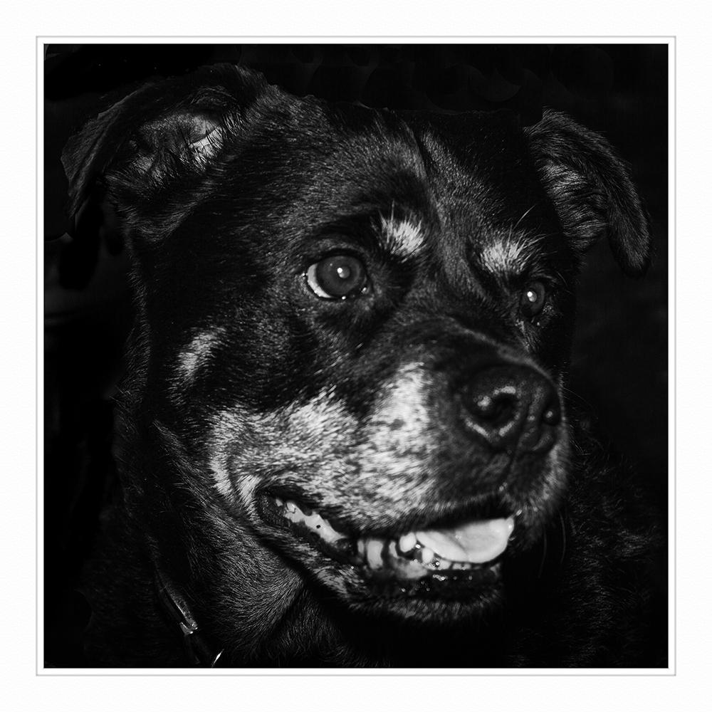 _MG_4064 Big Si dog MOUNTED (1 of 1)