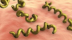 Syphilis- An Alert!