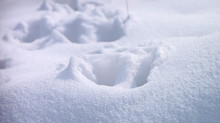 January Snow Recap