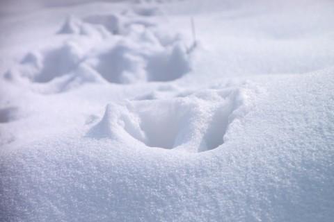 Cat-Footprints-in-Snow__64330-480x320.jpg
