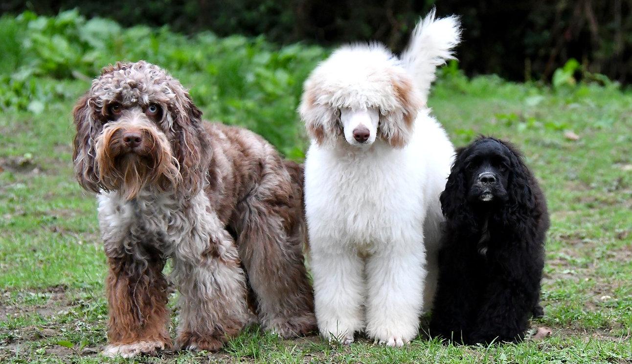 Dog grooming Rustington Littlehapton