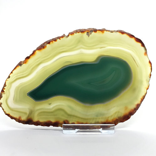 Green Agate Slice -Size 4 - C - Polished with Free Stand