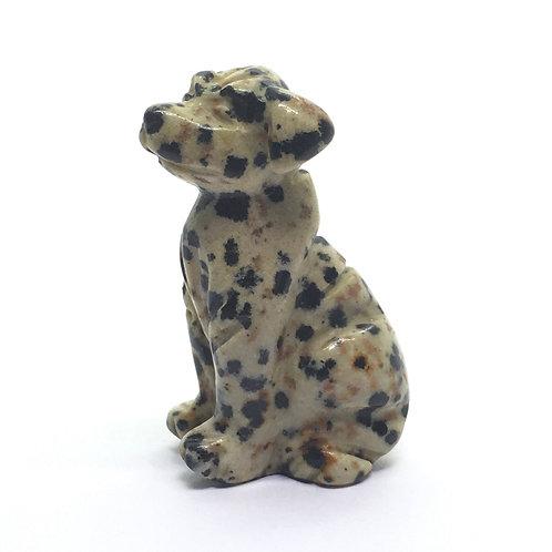 Jasper Dalmatian Crystal Dalmatian Dog