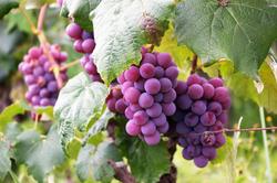 berries-bunch-colors-760281