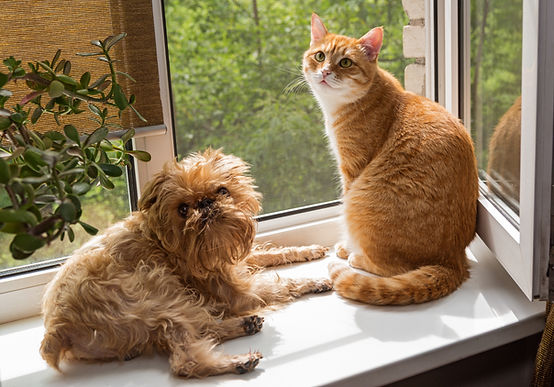 Ginger the cat and the dog sit on the wi