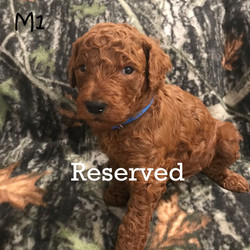 M1 reserved