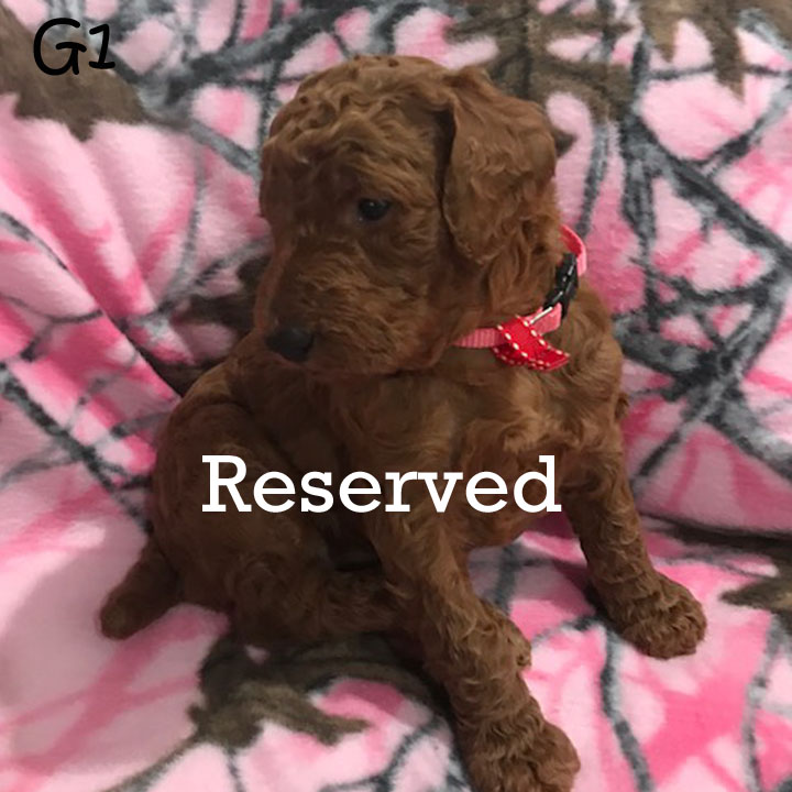 G1 reserved