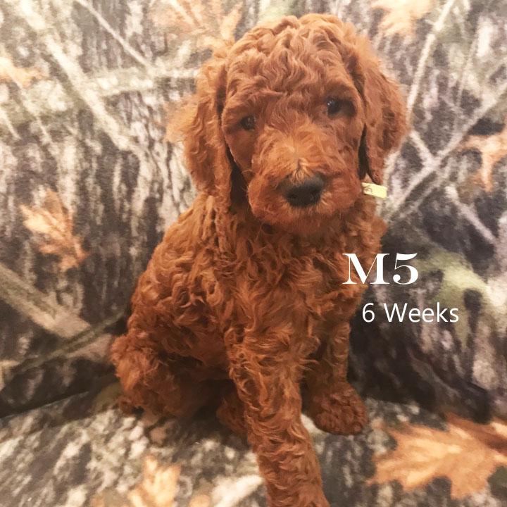 M5 6 wks