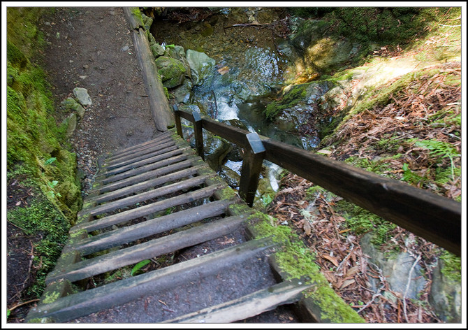 Matt Davis, Steep Ravine & Dipsea Trails