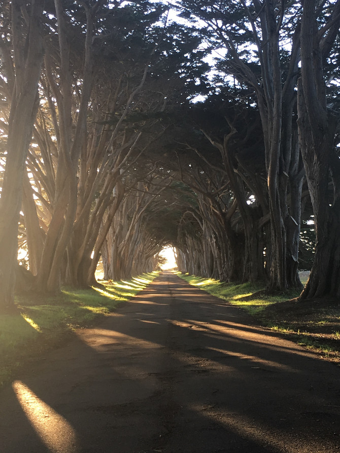 Cypress Tree Tunnel & Elephant Seals