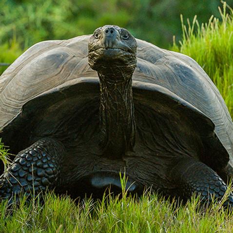 Galapagos Islands Yoga Retreat