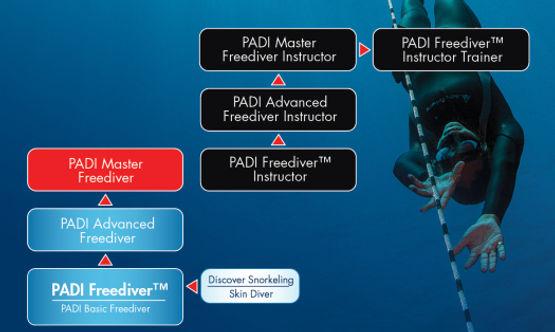 padi_freediver_flowchart.jpg