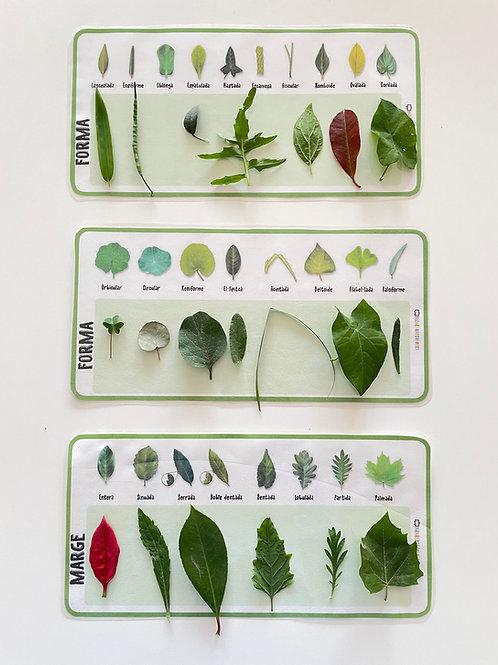 Tipos de hojas