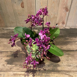 Orchideé æske.jpeg