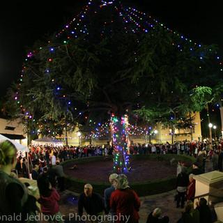 Christmas Tree Lighting 2017