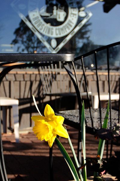 Daffodil-Mission-Coffe-5003.jpg