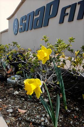 Daffodil-Snap-Fitness-4985.jpg